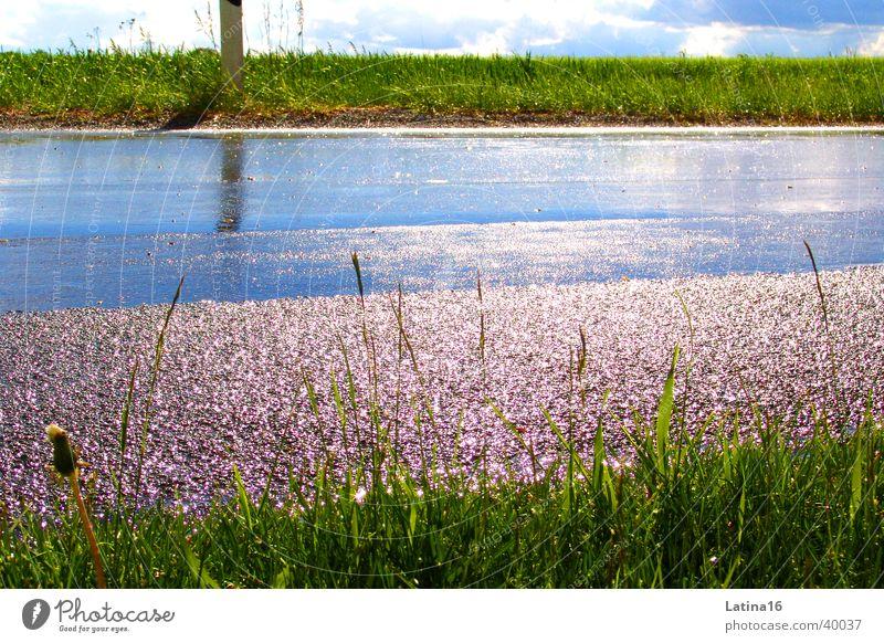 Aprilwetter nass Gras grün Wolken Straße Regen Sonne Himmel blau