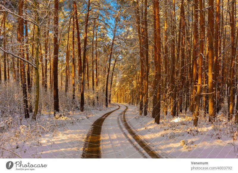 Waldweg im Winter mit Schnee , die Sonne scheint durch die Baumkronen bis auf den Waldboden , Kiefernwald Schneise Wälder Bäume Gras Ast Niederlassungen Natur