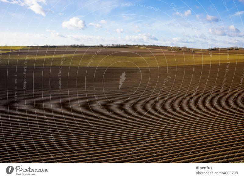Monokultur Ackerbau Ackerland Landschaft ländlich Landwirtschaft Spargel Spargelzeit Monokultur-Landwirtschaft Feld Natur Außenaufnahme Nutzpflanze Tag Horizont