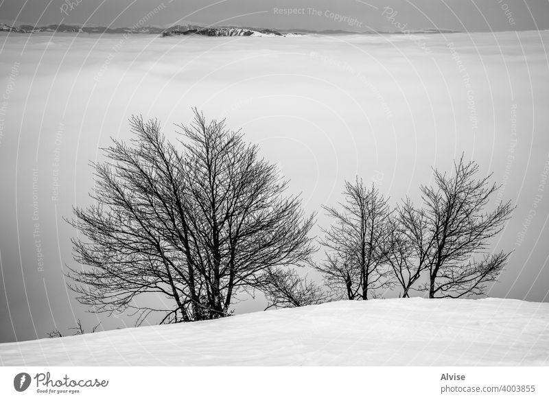 Schneebäume und Alpengipfel Winter Natur Sonnenaufgang alpin Horizont Landschaft Cloud Berge u. Gebirge Himmel Felsen Hügel Tourismus Gipfel hoch