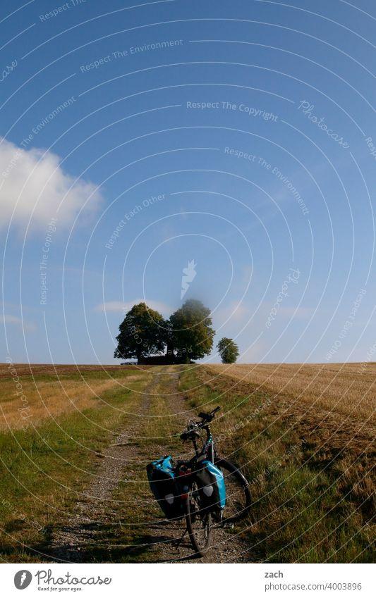 Königsetappe Wege & Pfade Radweg Straße geradeaus Baum Blauer Himmel Sommer Kornfeld Natur Wolkenhimmel blau Weizenfeld gelb Getreidefeld Gerste Landwirtschaft