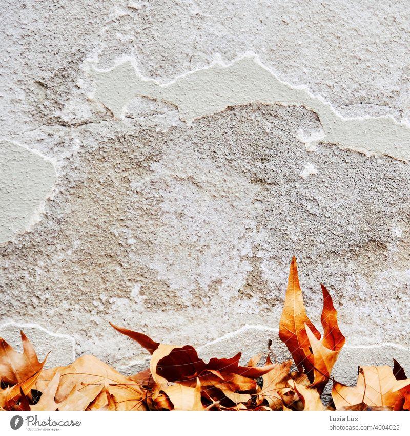 Herbstlaub, noch golden an einer Mauer mit bröckelndem Putz und Rissen herbstlich Herbstfärbung Blatt Menschenleer Außenaufnahme Farbfoto brökelnd Fassade