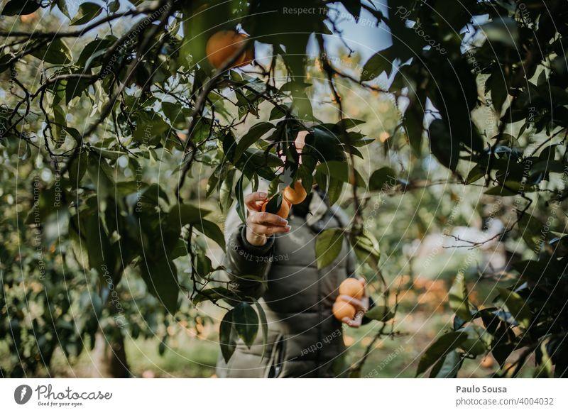 Frau pflückt Orangen unkenntlich Kommissionierung orange Orangenbaum Frucht Bioprodukte Biologische Landwirtschaft organisch Gesunde Ernährung Natur