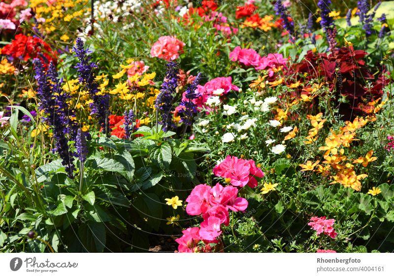 kunterbunt bepflanztes Blumenbeet blumen pflanzen garten sommer blumenbeet blüten blühen pink rot gelb grün weiß color gärtner gartenschau pflanzensorte juli