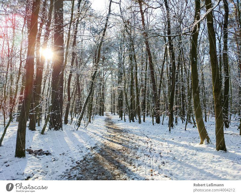 ein verschneiter Wald, die Sonne scheint durch die Bäume wald schnee winter bäume winterlich sonnenschein frost eis fenster eingefroren weg panorama