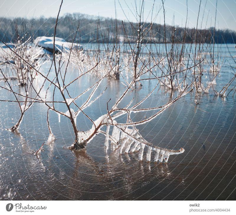 Schockgefroren Pflanze Eis Frost Wildpflanze Zweig kalt Umwelt Winter Farbfoto nah Detailaufnahme Strukturen & Formen Menschenleer Außenaufnahme Eiskristall