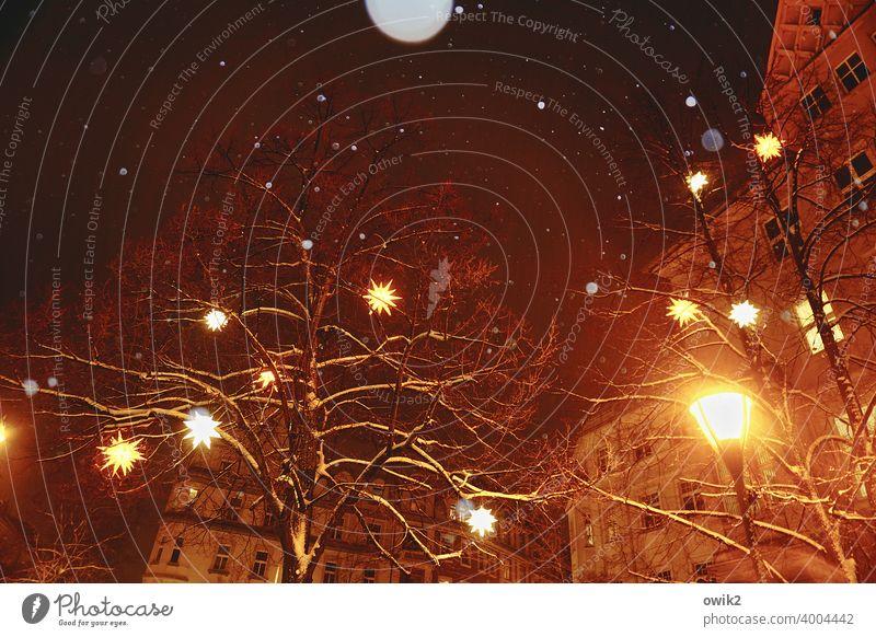 Lichterscheinung Zweige u. Äste Baum Winter Nachthimmel Herrnhuter Sterne Weihnachtsstern Dekoration & Verzierung Kunststoff Holz Zeichen hängen Geborgenheit