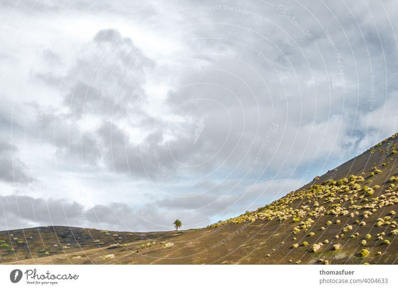 einzelner Baum in der Ferne Fernweh Lanzarote Schönes Wetter Berge u. Gebirge Ferien & Urlaub & Reisen Freiheit Sommer Himmel Wolken Horizont Klima ruhig