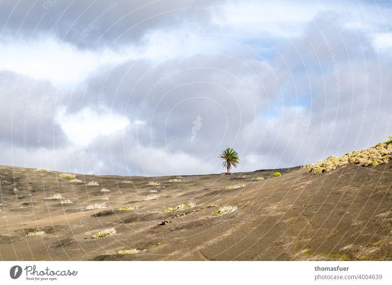 1 Baum zwischen den Vulkanen Farbfoto Ziel meditativ Gipfel Menschenleer Kontemplation Einsamkeit Panorama (Aussicht) Schatten Licht Tag Außenaufnahme Stimmung