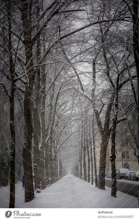 Allee mit beschneiten Bäumen im Winter Schnee weiß urban Stadt schneien frieren Eis kalt Schneefall Schneeflocke Außenaufnahme Alleebäume Frost Wetter