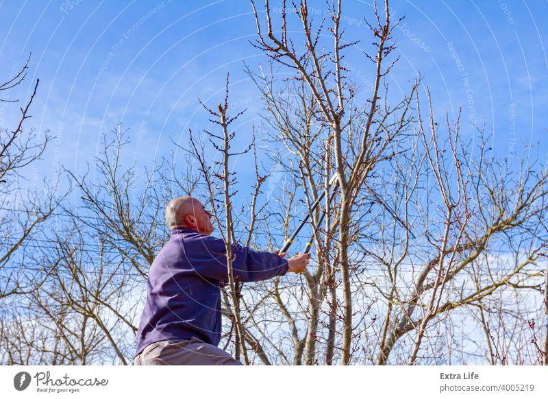 Gärtner schneidet Äste, beschneidet Obstbäume mit Astschere im Obstgarten Ackerbau Apfel Klinge Botanik Schutzdach Pflege Kaukasier Hausarbeiten Schermaschine