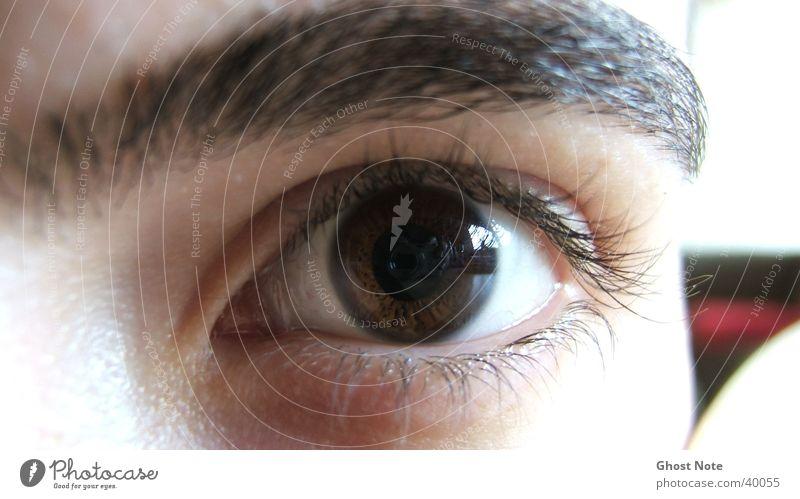 *AUGENBLICK* Mann Auge braun maskulin Wimpern Augenbraue