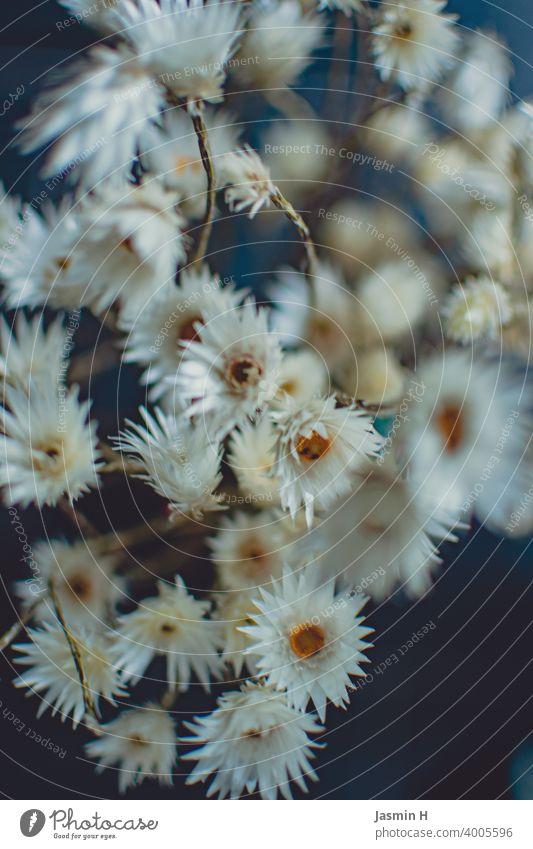 Weisse Trockenblumen Nahaufnahme weiß getrocknet Blume natürlich Tischdekoration weiße blüten natürlich aussehend Natürlichkeit zu Hause