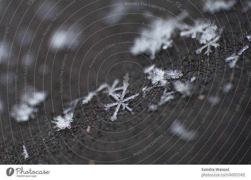 Schneeflocken Winter Einzigartigkeit einzigartig Eiskristall Kristall Wasser gefroren Kälte macro shot Makroaufnahme