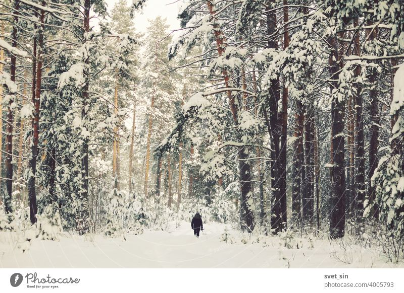 Schwarze kleine Figur eines Mannes mit einem Kind auf den Schultern, der in einem verschneiten Winterkiefernwald spazieren geht. abstrakt allein Kunst