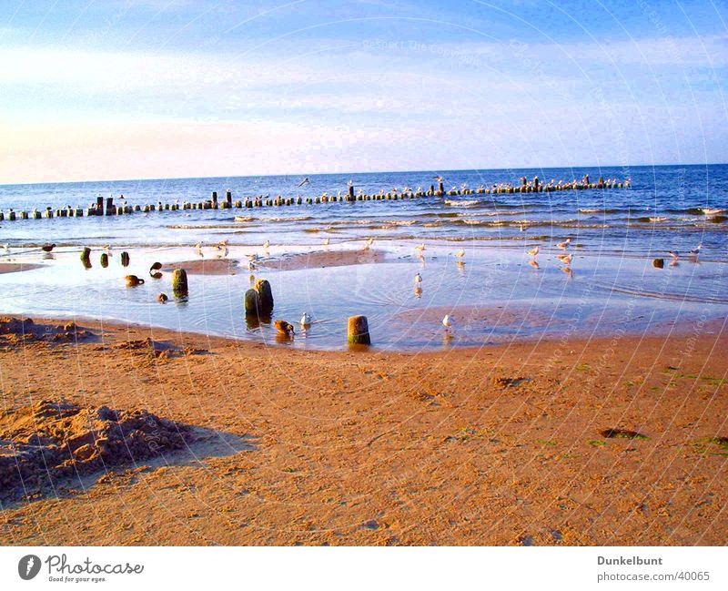 Möven am Meer Meer Strand Sand Verkehr Ostsee