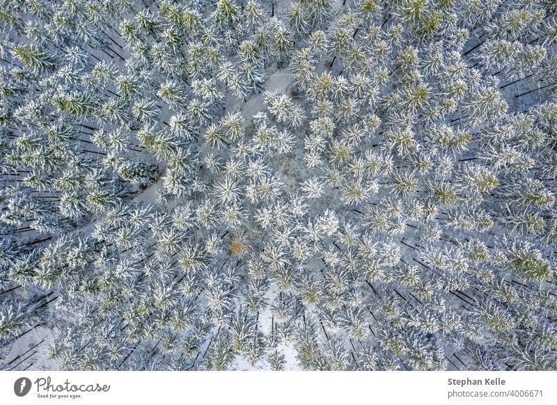 Aerial Drone Ansicht von Schnee bedeckt immergrünen Weihnachtsbaum Wald nach Schnee Blizzard - weiß schöne Baumkronen. Natur Winter Hintergrund