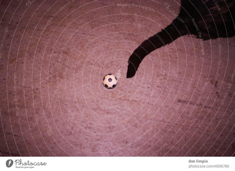 Kick Off Fußball Sport Ballsport Menschenleer Freizeit & Hobby Spielen Farbfoto Sportveranstaltung sportlich Sport-Training Fitness Torwart Sportler