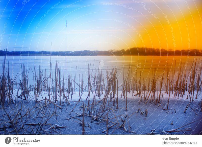 Greenkeepers Secret Love/Fault natur see Preetz Winter Eis gefroren Landschaft kalt Wasser Umwelt Menschenleer Frost Tag Seeufer Eisfläche Außenaufnahme frieren