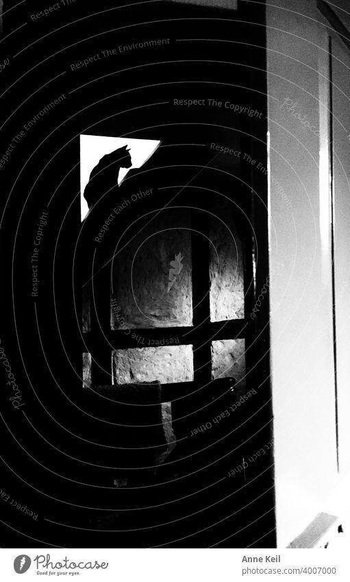 Durch den Türspalt die Silhouette der kleinen Katze entdeckt. Katzen schwarzweiss Innenaufnahme licht schatten