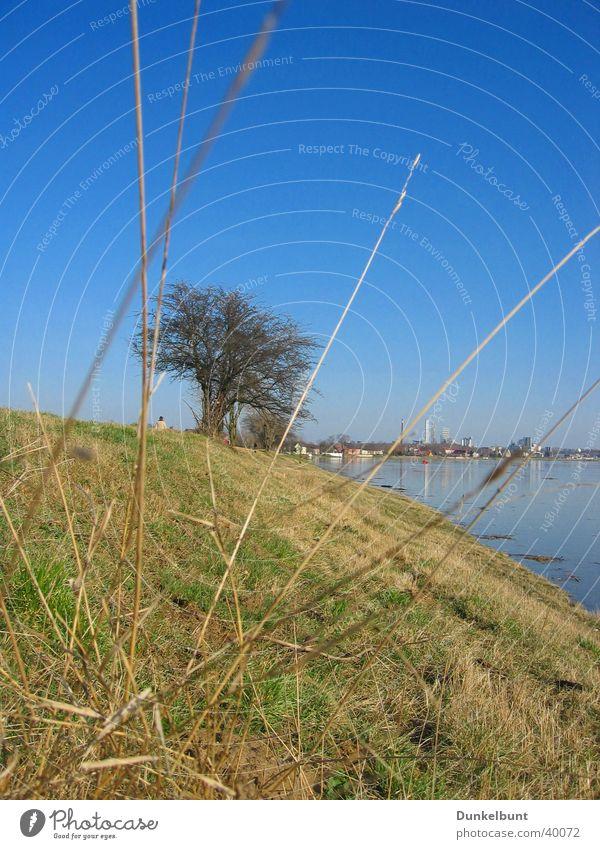Elbhang Gras Elbe Berghang Hochwasser