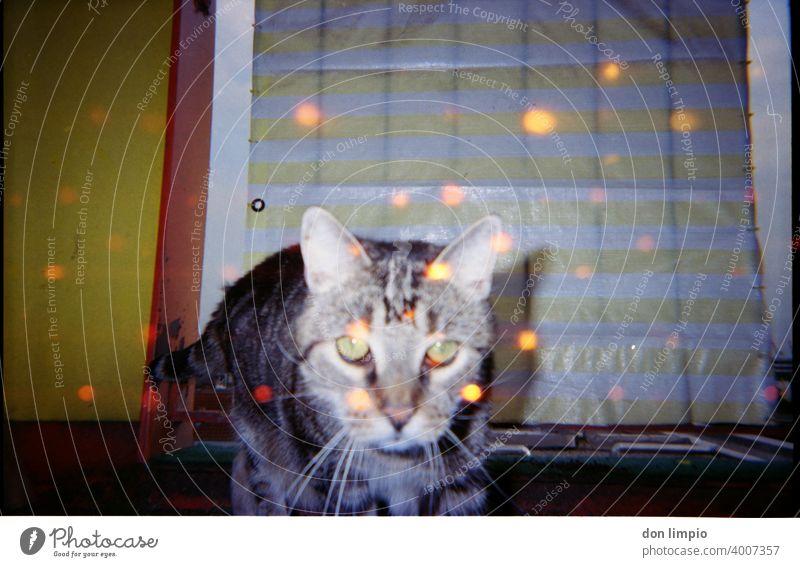rote Augen Effekt Katze trash retro Farbfoto Textfreiraum oben Retro-Trash