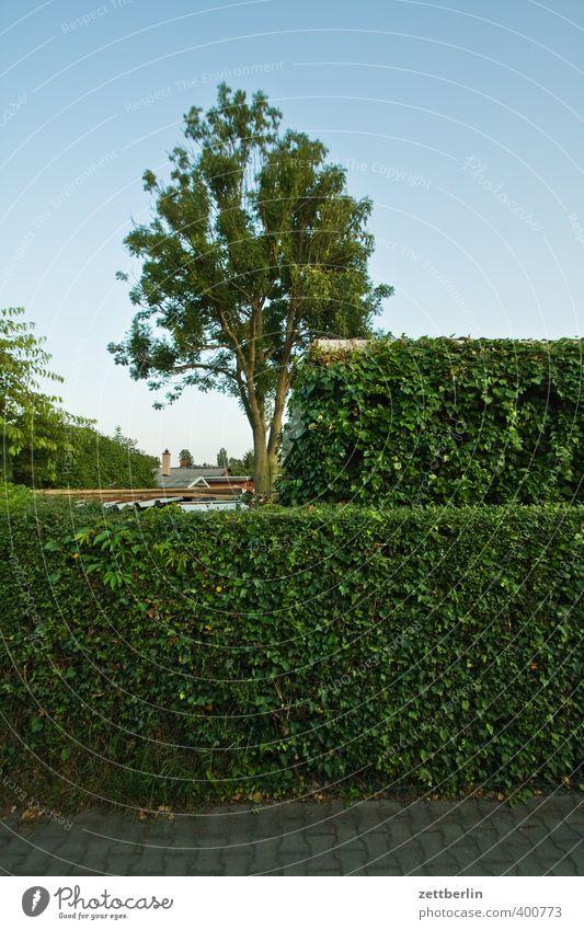 Zwei Hecken, ein Baum Sommer Häusliches Leben Wohnung Garten Umwelt Natur Pflanze Klima Wetter Schönes Wetter Park Kleinstadt Stadtrand gut schön Grundstück
