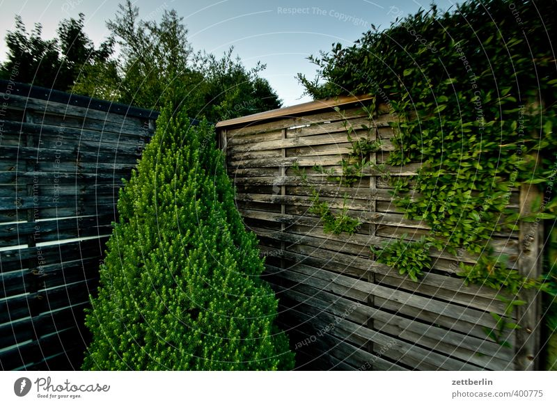 Thuja Lifestyle Sommer Garten Pflanze Wetter Schönes Wetter Park Kleinstadt Stadtrand Mauer Wand Einsamkeit stagnierend Tradition Grundstück himmel