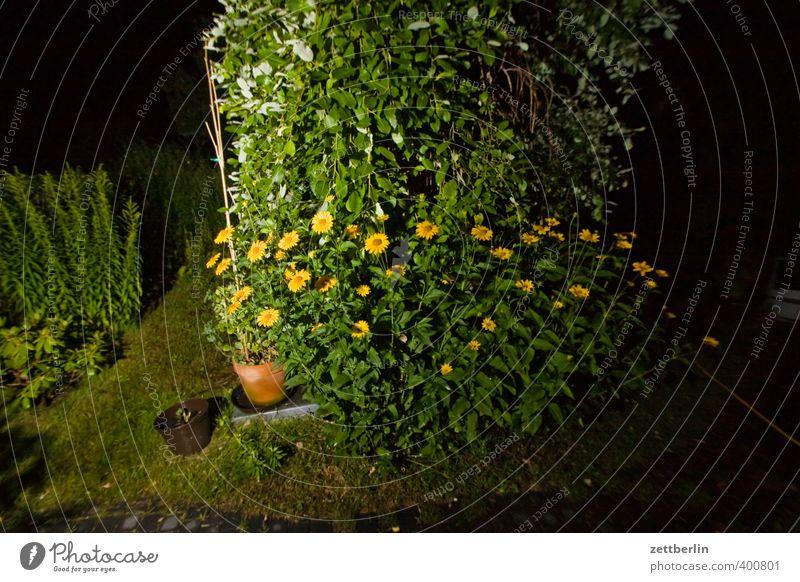 Angeblitzter Sonnenhut Natur schön Pflanze Sommer Baum Blume Wiese Garten Park Wetter Wohnung Freizeit & Hobby Häusliches Leben Schönes Wetter gut Blumenwiese
