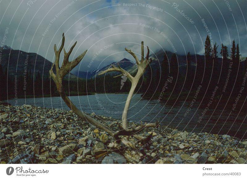 Geweih am Fluss Elch Horn dunkel schlechtes Wetter Kanada Wolken