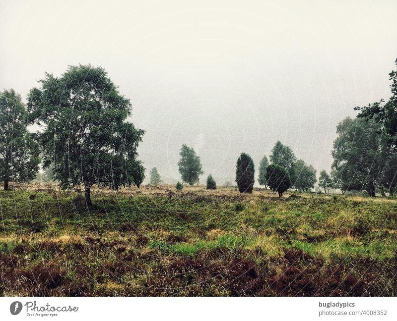 Heide im Nebel Lüneburger Heide Wolken grün Heidekraut Bäume trist herbstlich Herbst Wetter schlechtes Wetter Landschaft Natur Nieselregen dunkel Einsamkeit