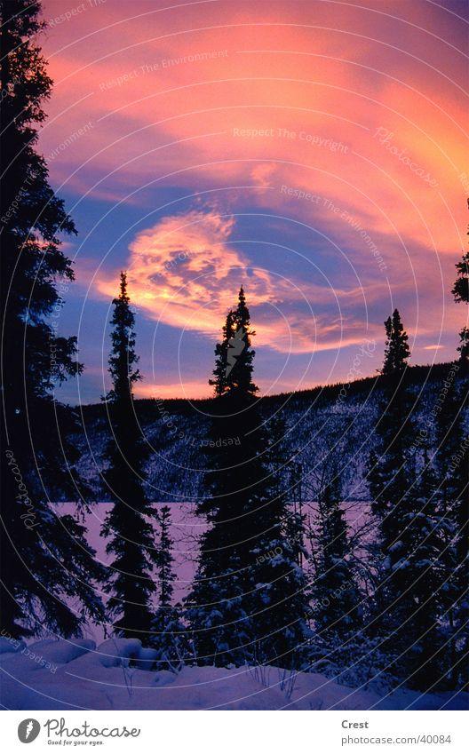 Abendstimmung Baum Winter Einsamkeit kalt Schnee
