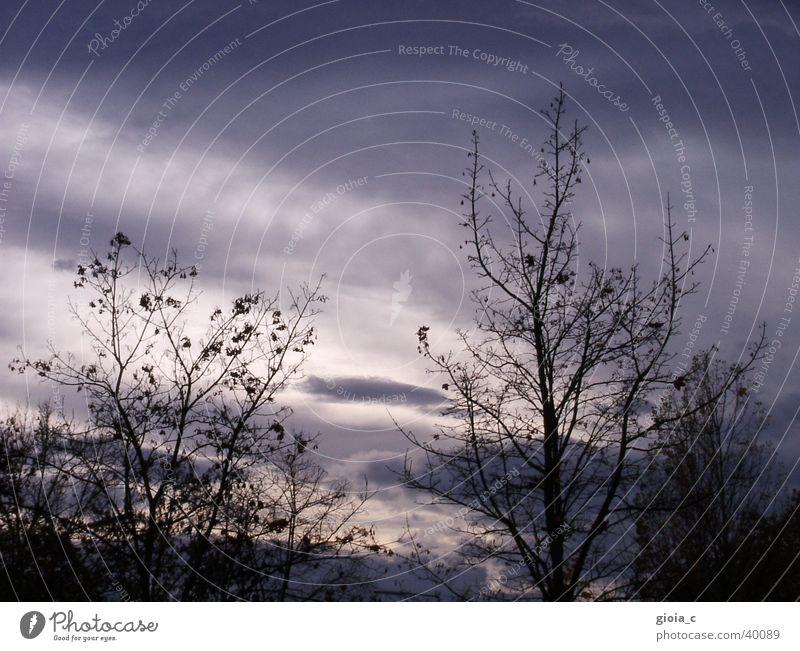 aussicht auf die zukunft Himmel Baum blau Wolken dunkel grau Wetter Hoffnung Trauer Ast Wut Verzweiflung Ärger Busbahnhof Vöcklabruck
