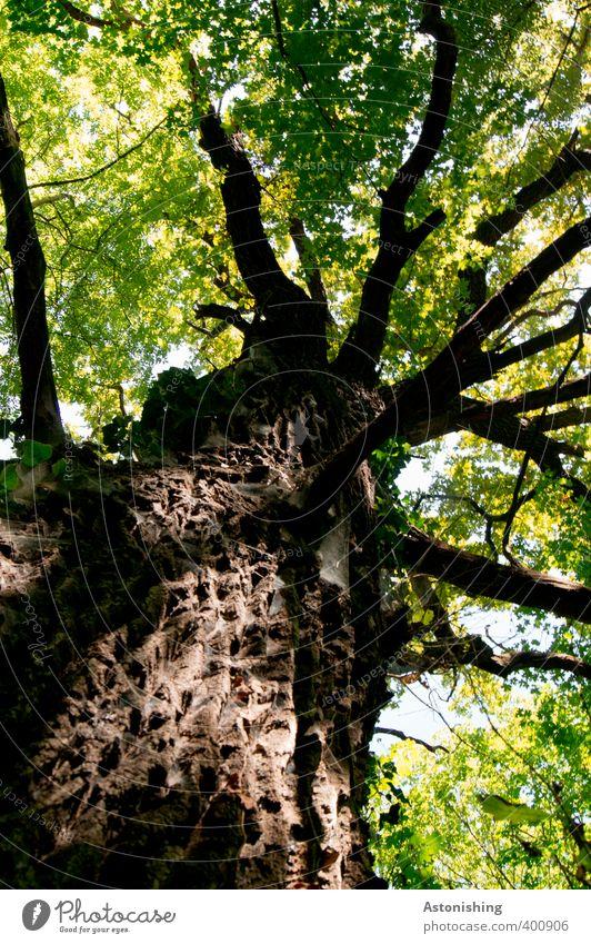 Baum Himmel Natur alt grün Sommer Pflanze Baum Landschaft Blatt schwarz Wald Umwelt Holz braun Wetter stehen