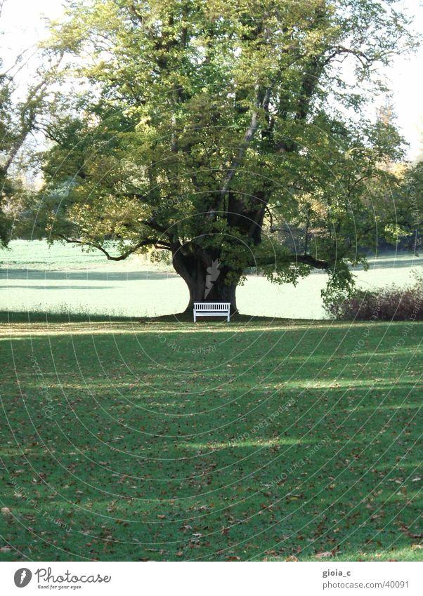 the tree Baum grün Wiese Park Blatt Sommer Bank kogl Landschaft Baumstamm Ast groß