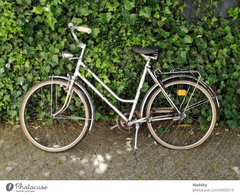 Altes Damenrad im Sommer vor einer grünen Hecke auf grauem Verbundpflaster in Oerlinghausen bei Bielefeld im Teutoburger Wald in Ostwestfalen-Lippe Fahrrad Rad