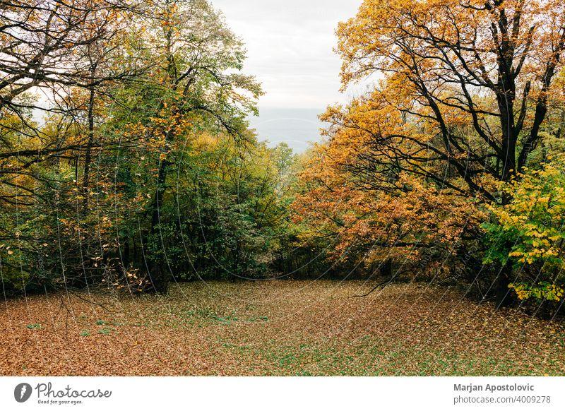 Blick in den Wald im Herbst Abenteuer Hintergrund schön Buchsbaum Ast Farbe farbenfroh Tag Umwelt Europa erkunden fallen Laubwerk Forstwirtschaft golden grün