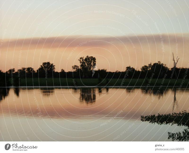 untitled rosa Baum See Australien Reflexion & Spiegelung Sonnenuntergang Frieden Wasser Fluss