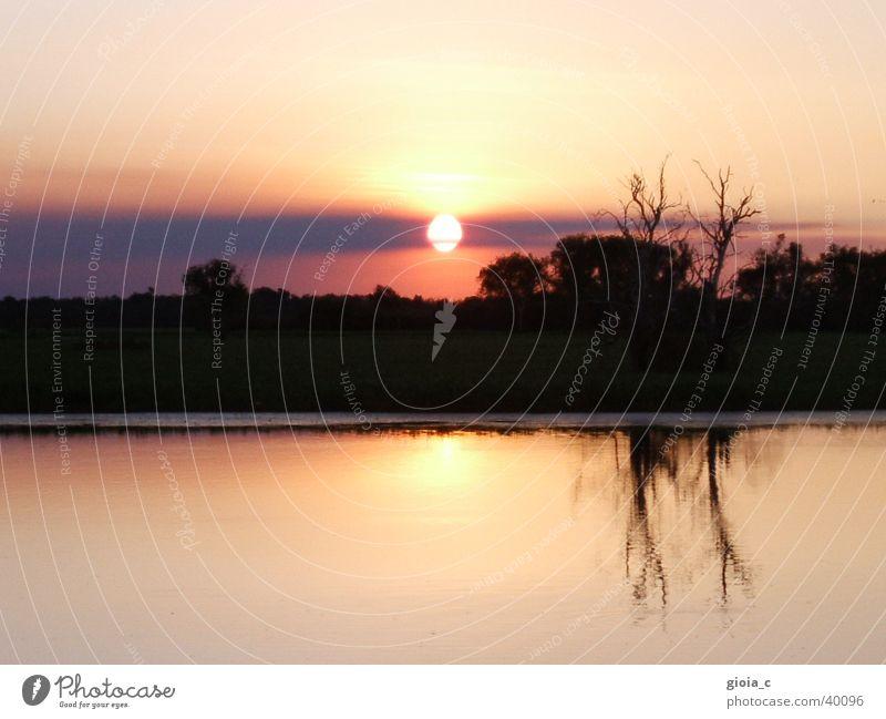 sunset Baum See Reflexion & Spiegelung Wald Wolken Teich rosa Australien Frieden Sonne Fluss Ast Sonnenuntergang