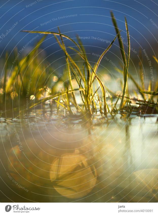 Gräser im Wasser bei Sonnenuntergang Gras Bach Licht Spiegelung Wasserspiegelung Himmel Reflexion & Spiegelung Menschenleer Außenaufnahme Farbfoto Natur