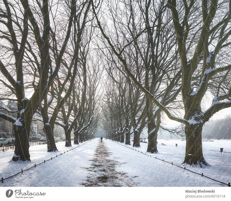 Platanenallee im Jan-Kasprowicz-Park im Winter, Szczecin, Polen. Jasne Blonia Baum Großstadt Stettin Schnee Gasse Boulevard Europa im Freien kalt Straße Wetter