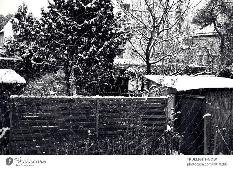 Feine Spuren von Schnee in einer dicht gedrängten Vorstadt Garten Szene mit Holz Zaun, Sichtschutz, Holzhütten, verschiedenen Obst- und Nadelbäumen, Hecken, blassen Silhouetten von Häusern im Hintergrund