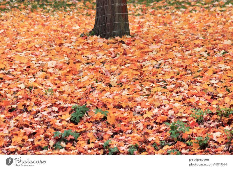 ____II_____ Ferien & Urlaub & Reisen Umwelt Natur Pflanze Erde Herbst Schönes Wetter Baum Blatt Garten Park Wald Holz alt braun Laubbaum Blätterdach Herbstlaub