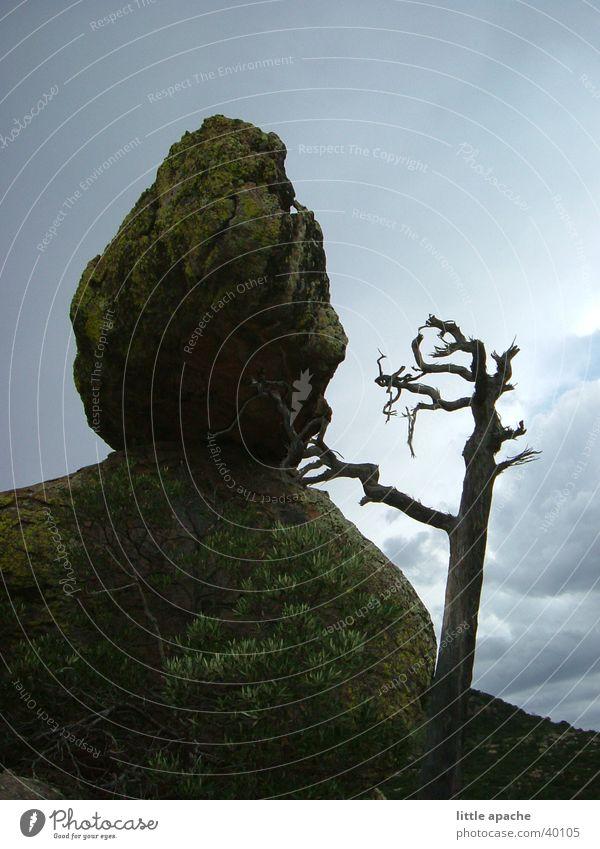 Chiricahua National Monument Himmel Baum Berge u. Gebirge Stein Regen Felsen USA Ast Dinge Gewitter Western Indianer Arizona Ranger