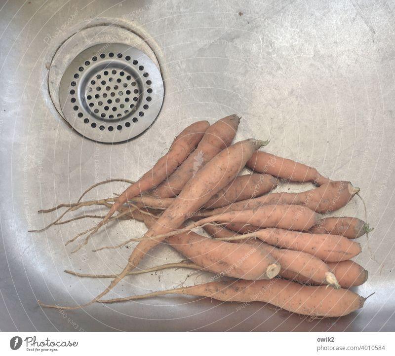 Dicke Wurzeln Möhren Waschbecken Reinigen Waschen Küche Karotten Bioprodukte orange Nahrung Ernährung Nahrungsmittel Gemüse putzen Farbfoto Gesunde Ernährung