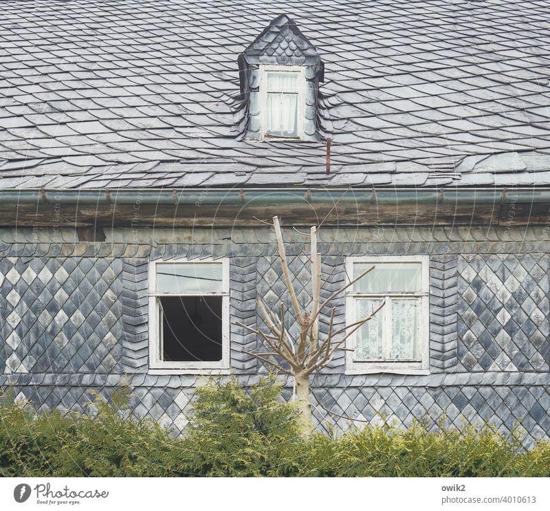 Durchatmen Haus schiefer schieferwand Fenster Menschenleer Farbfoto Gebäude Schiefer Fassade Muster Wand Außenaufnahme dekorativ Detailaufnahme Architektur Baum