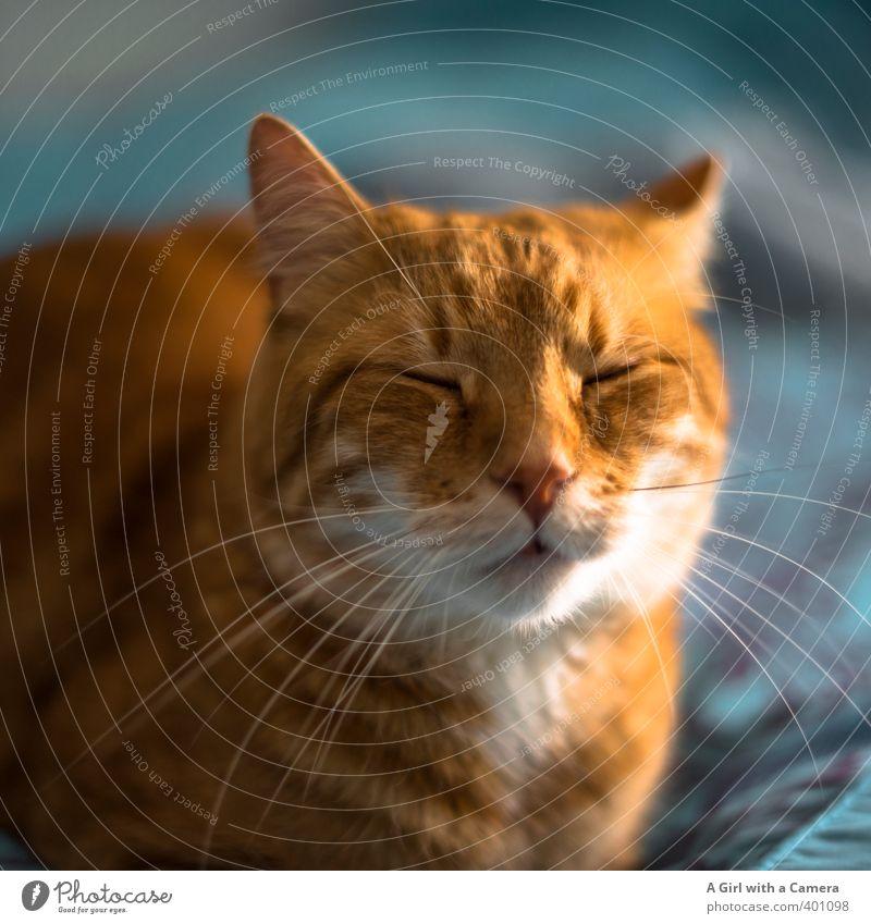 miowwww Tier Haustier Katze 1 schön einzigartig listig eigenwillig Schnurren Katzenkopf Farbfoto Innenaufnahme Menschenleer Tag Schwache Tiefenschärfe