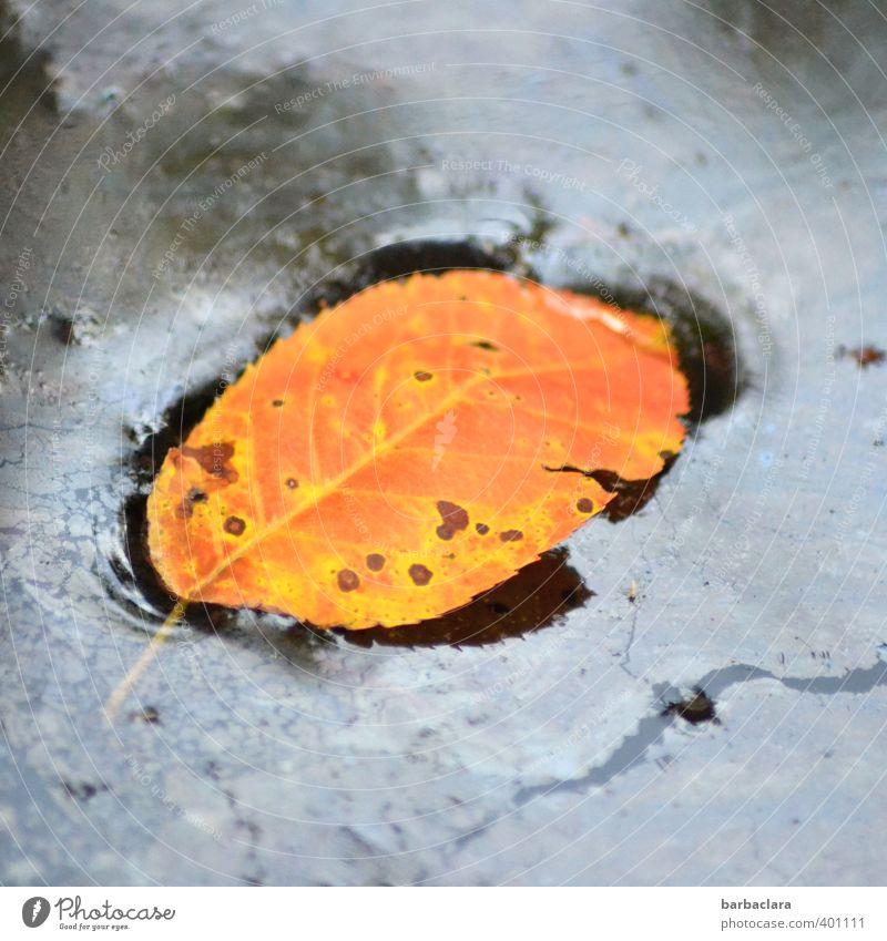 Verfallsdatum überschritten | aber gut konserviert Wasser Herbst Pflanze Blatt Schwimmen & Baden authentisch fest Flüssigkeit nass blau orange Natur Überleben