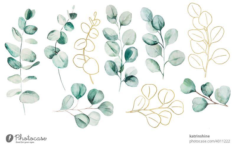 Aquarell Eucaliptus Blätter Set Illustration Wasserfarbe Eukaliptus Ast golden Zeichnung grün tropisch Grafik u. Illustration Dschungel Papier botanisch Blatt