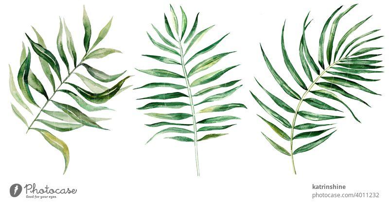 Aquarell-Palme tropische Blätter Illustration Wasserfarbe Handfläche Zeichnung grün Grafik u. Illustration Dschungel Papier botanisch Blatt exotisch